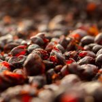Cascara, the fruit of the coffee cherry, is sweet, tangy, and anti-oxidant rich